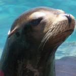 In Seaworld können Sie Robben, Delfine und Wale hautnah erleben!