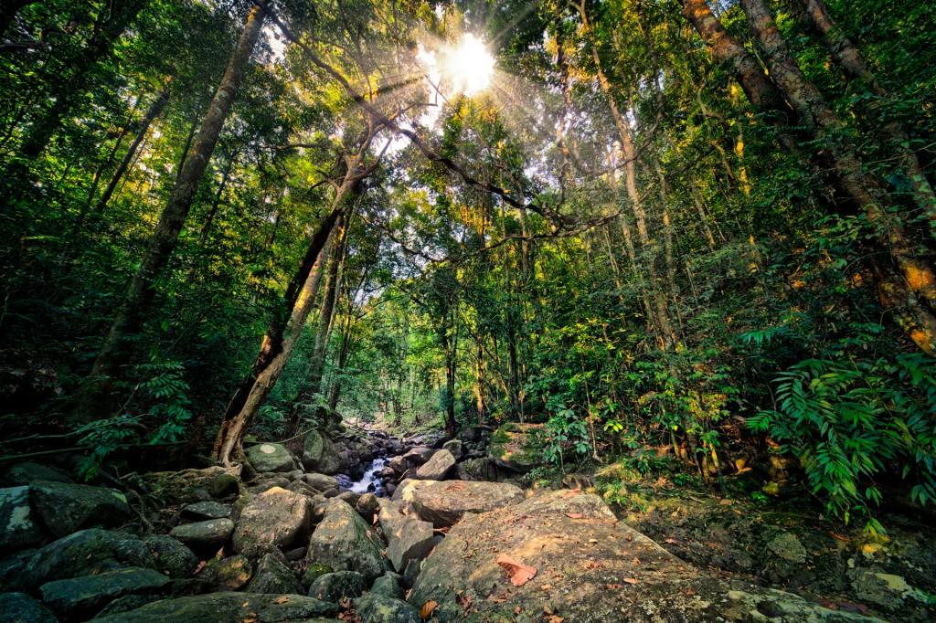 Abenteuerurlaub im Dschungel